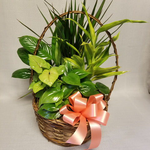 Brown basket with a handle filled with assorted indoor green plants and decorated with a peach satin bow