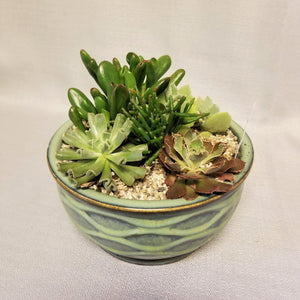 Succulent garden with five assorted succulent plants in a ceramic container, full view