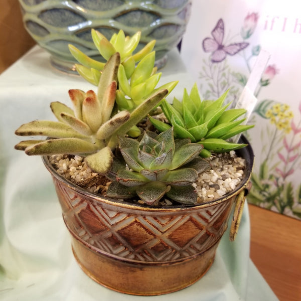 Succulent garden with four assorted succulent plants in a metal tin container, full view