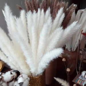 Fashionable  25Pcs/Set Natural Dried Pampas Grass Reed Home Wedding Decor Photography Props