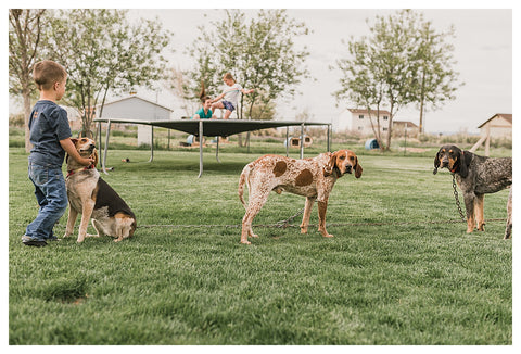 How to, Dog Tie-out, tutorial, hounds, camping with dogs, camping with hounds, hunting, family, kids, hunting journey