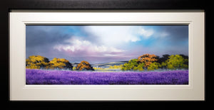 Autumn Lavender - SOLD Allan Morgan