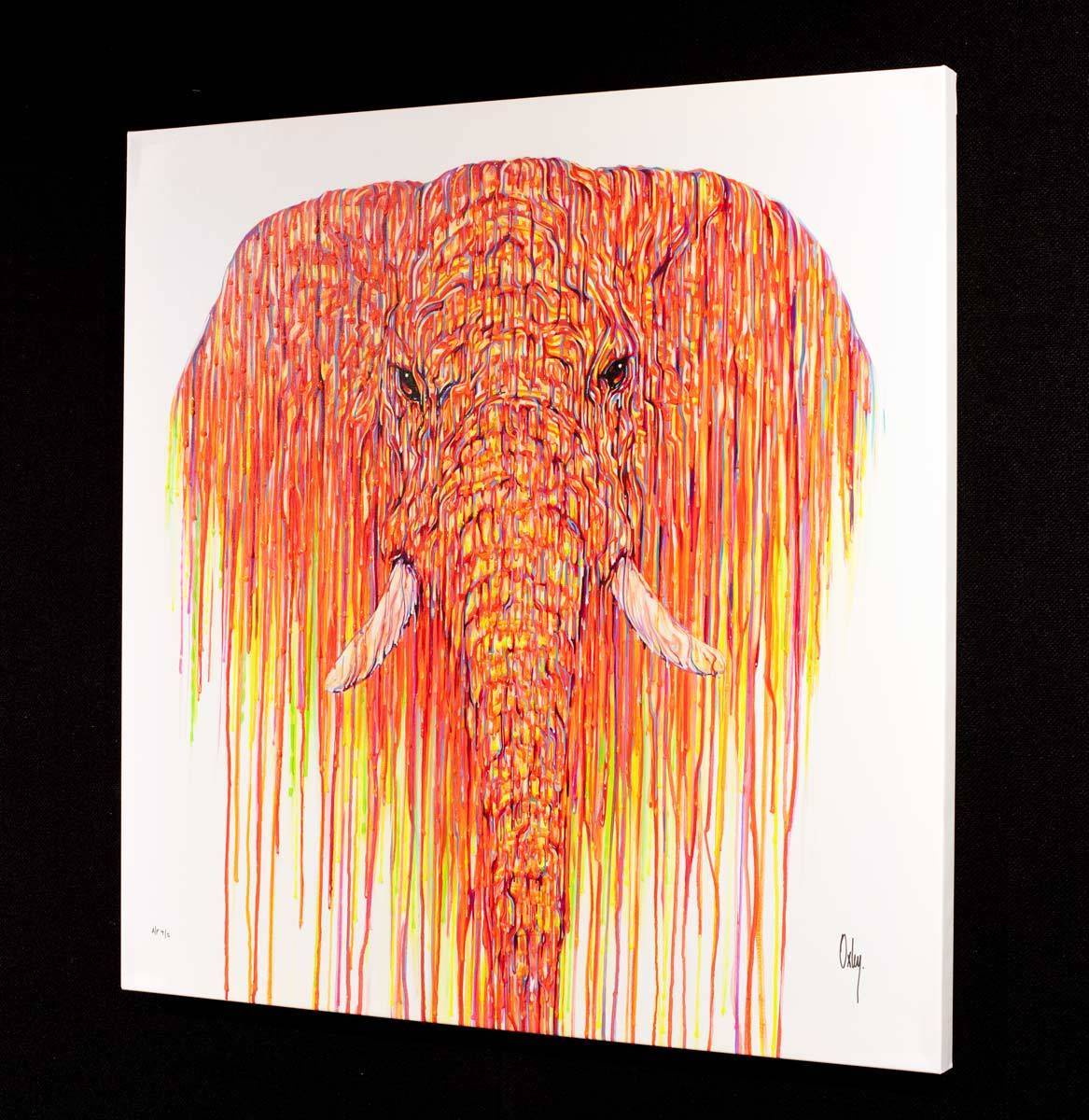Satsuma - Edition - RARE Robert Oxley Box Canvas