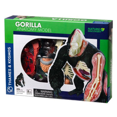Animal Anatomy - Gorilla