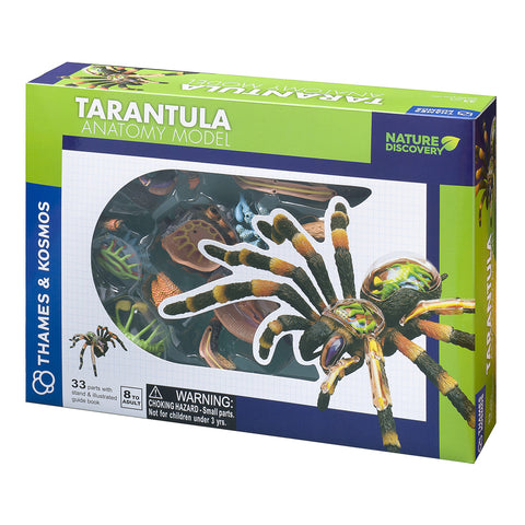 Animal Anatomy - Tarantula