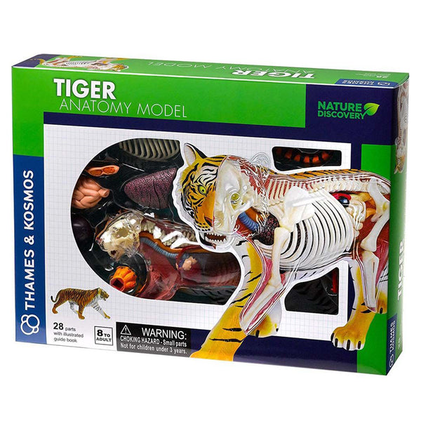 Animal Anatomy - Tiger