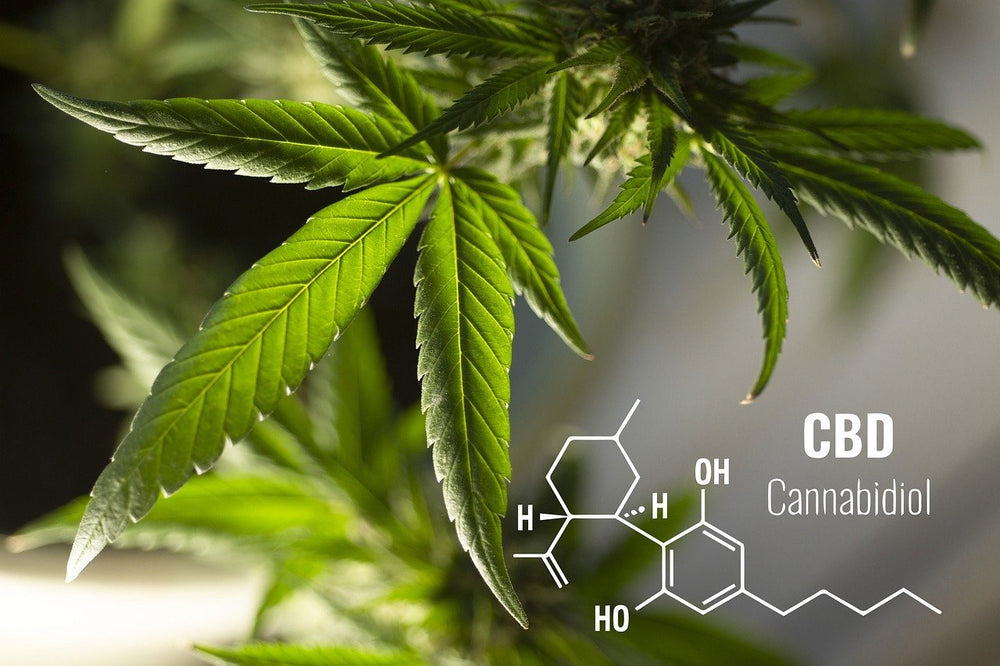 How many types of cannabinoids are there?