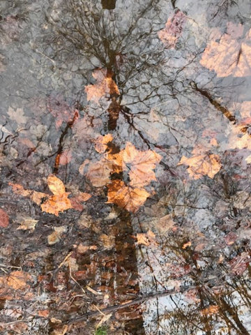 Fall Reflection with Leaves