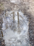 Winter Puddle Reflection