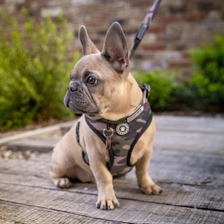French Bulldog wearing a Woofingdales green & brown Camouflage print reversible mesh harness