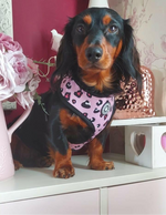 """Candy Collection"" Candy Floss & Bubblegum Leopard Reversible Dog Harness"