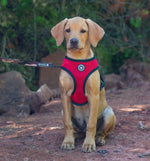 """I'm Fabulous"" 2 in 1 Reversible Dog Harness Red & Black"