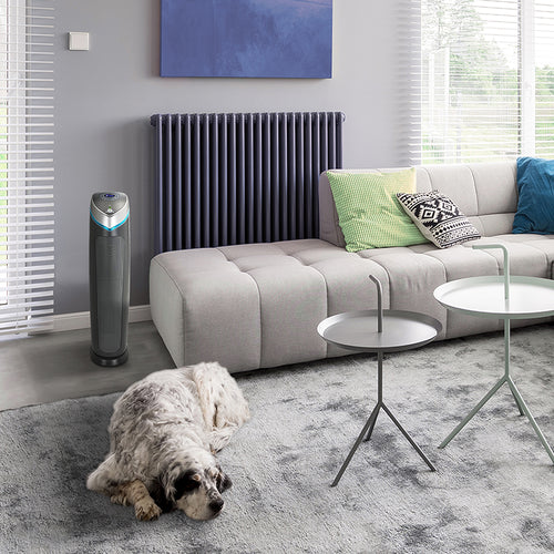 GermGuardian AC5250PT and relaxed dog in a spacious living room.
