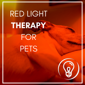 red light therapy for your pet