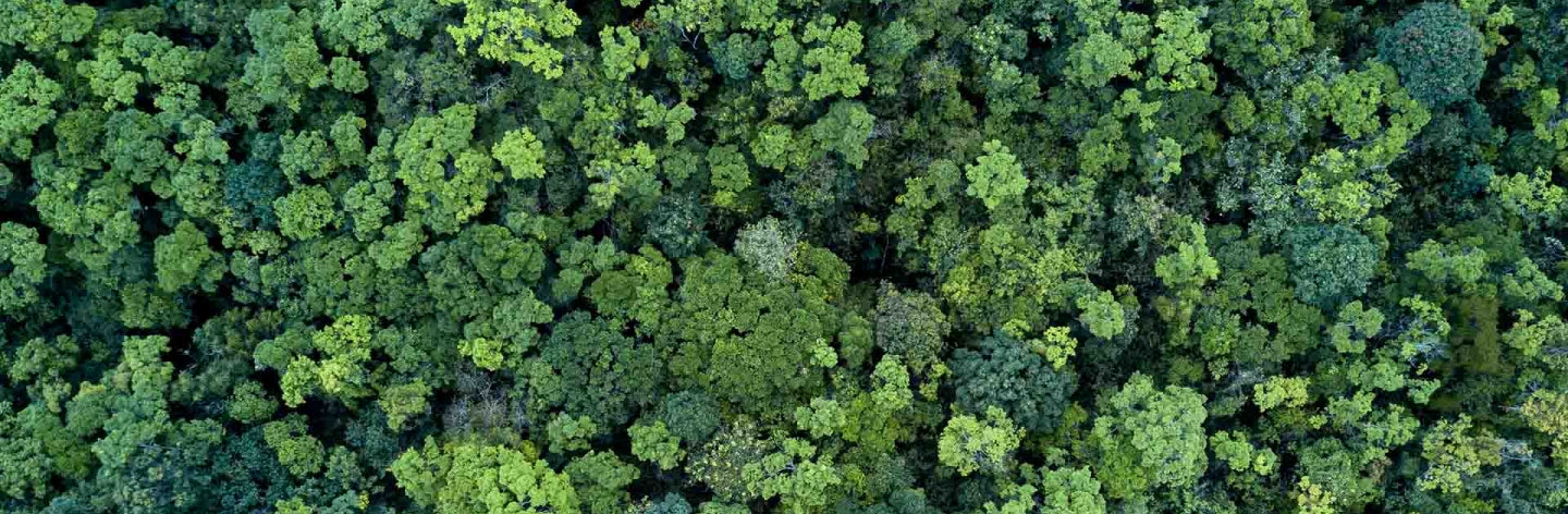 trees planted for carbon neutrality