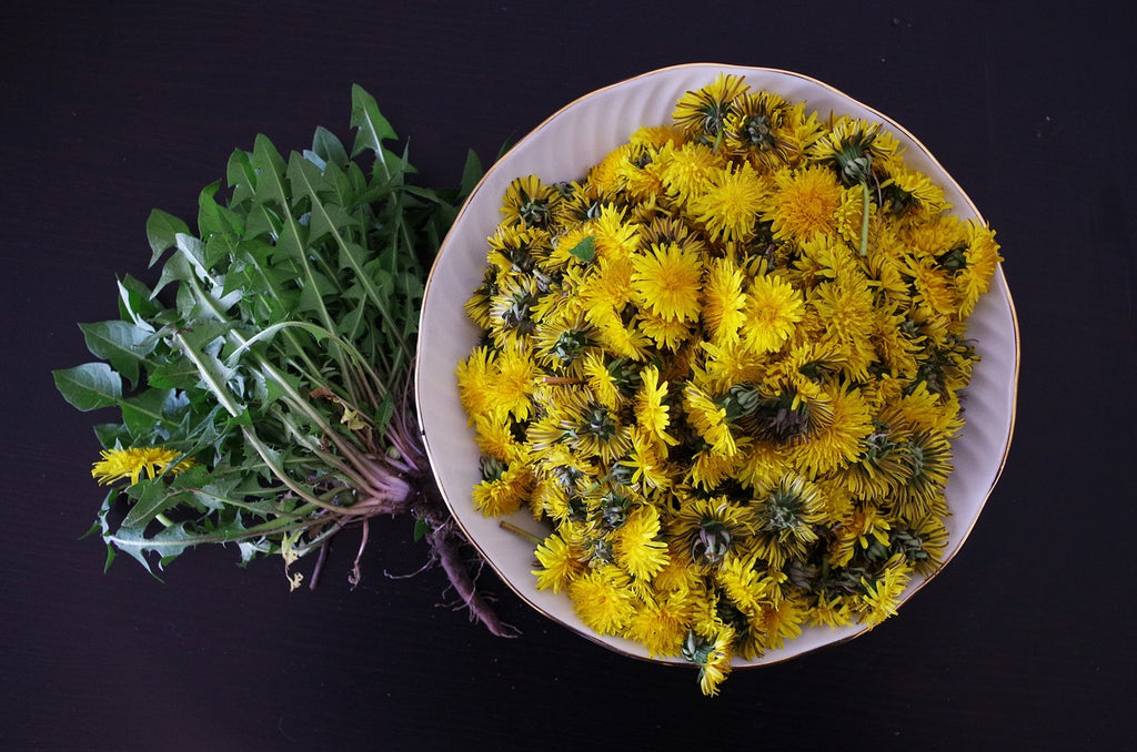Dandelion Tea Guide: Health Benefits, Side Effects, and Flavor Profile