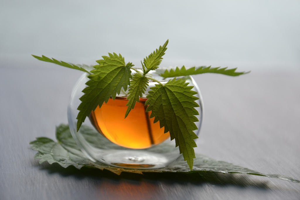 Nettle Tea Benefits From Allergy Relief to Decreased Inflammation