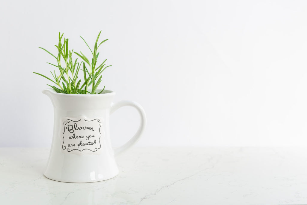 6 Rosemary Tea Benefits For Your Health