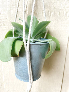 Macrame Plant Hanger with Gray