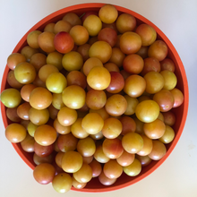 Load image into Gallery viewer, Mirabelle Plum