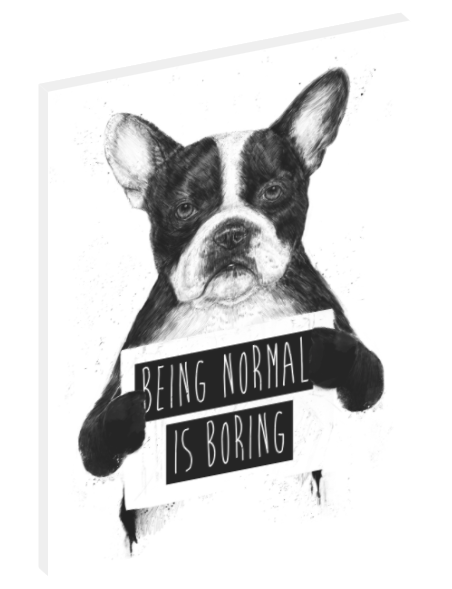 "Canvas wall art illustration of dog holding sign that says ""Being Normal Is Boring"" by Balázs Solti."