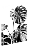 Canvas print wall art of abstract black and white Monstera plant by amini54.