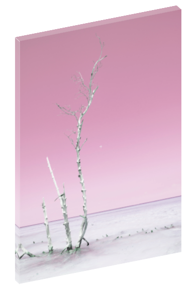 Canvas print wall art photograph of white trees in ocean in Cuba. Choose between ocean blue, pastel aquamarine, and pastel pink.