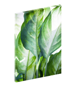 Canvas art print photograph of tropical leaves by Mark Ashkenazi.