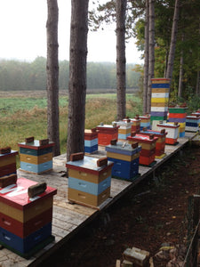 About Local: Crooked Hills Honey