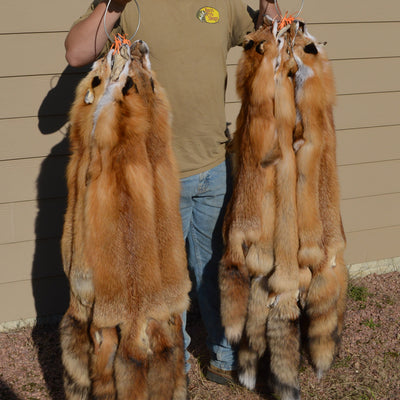 High Grade, Fully Prime Tanned Red Fox HGTNRF