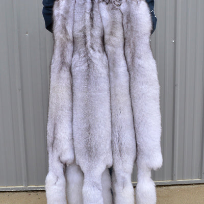 "ULTRA HUGE Select Tanned BLUE FOX Hide (60"" plus)"