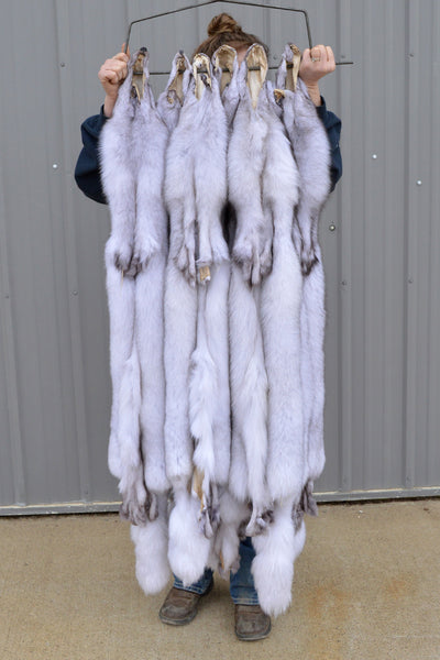 "LARGE Select Tanned BLUE FOX Hide (52"" plus)"