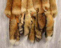 "Tanned Red Fox  Winter ""Heavy Fur"" Western Extra Large Premo (rfhwPremo)"