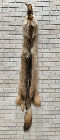 "Tanned Timber Wolf Silky 79"" tip to tip (TW#3)"