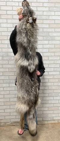 "Gorgeous Colored Tanned Timber Wolf With Feet 75"" tip to tip (TW#4)"