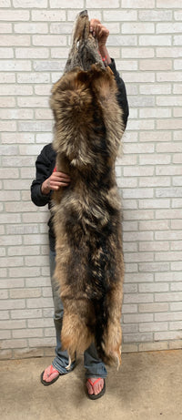 "Tanned Timber Wolf Heavy Fur 66"" (TW#2)"
