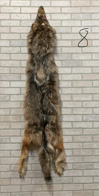 "Soft, Tanned Timber Wolf 71"" tip to tip (TW#8)"