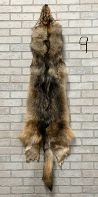 "Soft Tanned Timber Wolf Pelt 64"" tip to tip (TW#9)"