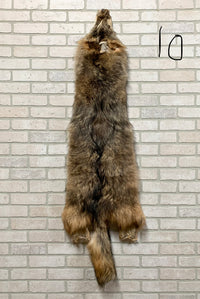 "Tanned Timber Wolf Pelt 61"" tip to tip  Great Value(TW#10)"