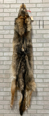 "Striking, Tanned Timber Wolf 66"" tip to tip (TW#11)"