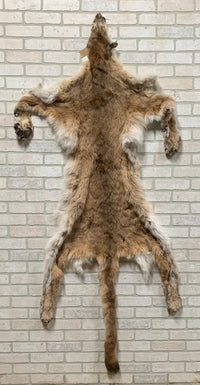 "Tanned Mountain Lion With Paws 79"" long tip to tip (Lion430)"