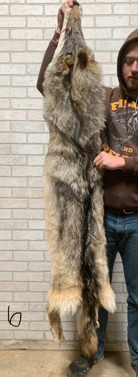 "Soft, Tanned Timber Wolf 73"" tip to tip (TW#6)"