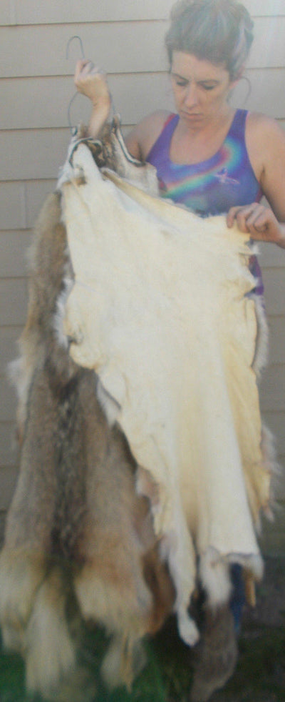 Soft Tanned Coyote hide with IMPERFECTIONS