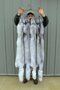 "HUGE Select Tanned BLUE FOX Hide 56"" plus (blufox56)"