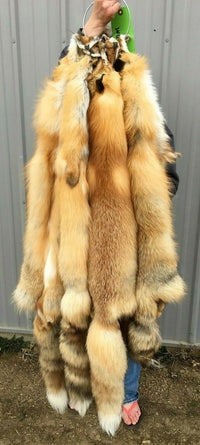 "Tanned Red Fox Winter ""Heavy Fur"" Western XL, some Imperfections (hrdwImper)"