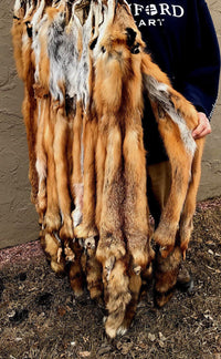 Beautiful Tanned Red Fox pelts, furs (rdfxsemi)