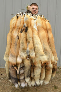 "Tanned Red Fox  Winter ""Heavy Fur"" Western Extra Large Medium Grade (rfhwMG)"
