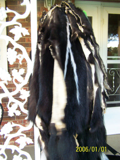 "Well Furred, 33""+Tanned Northern Skunk Pelts with Narrow Stripes"