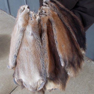 Winter Michigan Tanned Muskrat Pelts