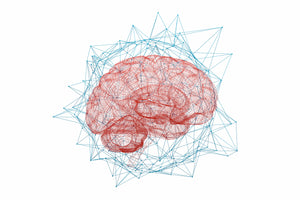 brain science and neural network